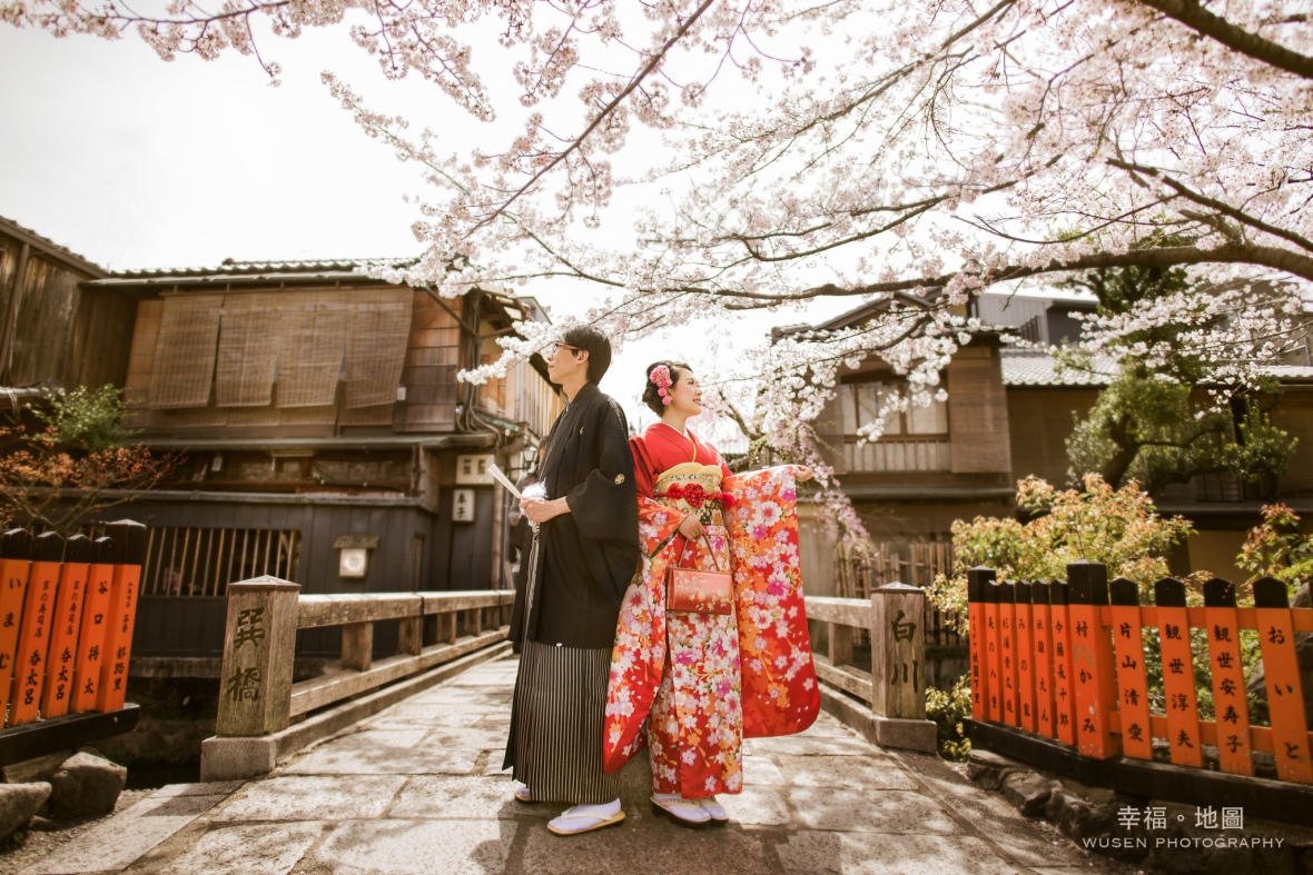白川通的櫻花