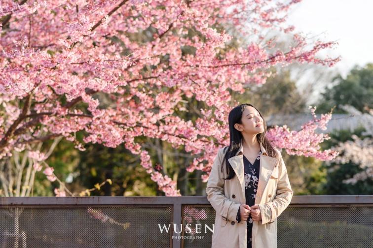 京都樱花, 旅游写真