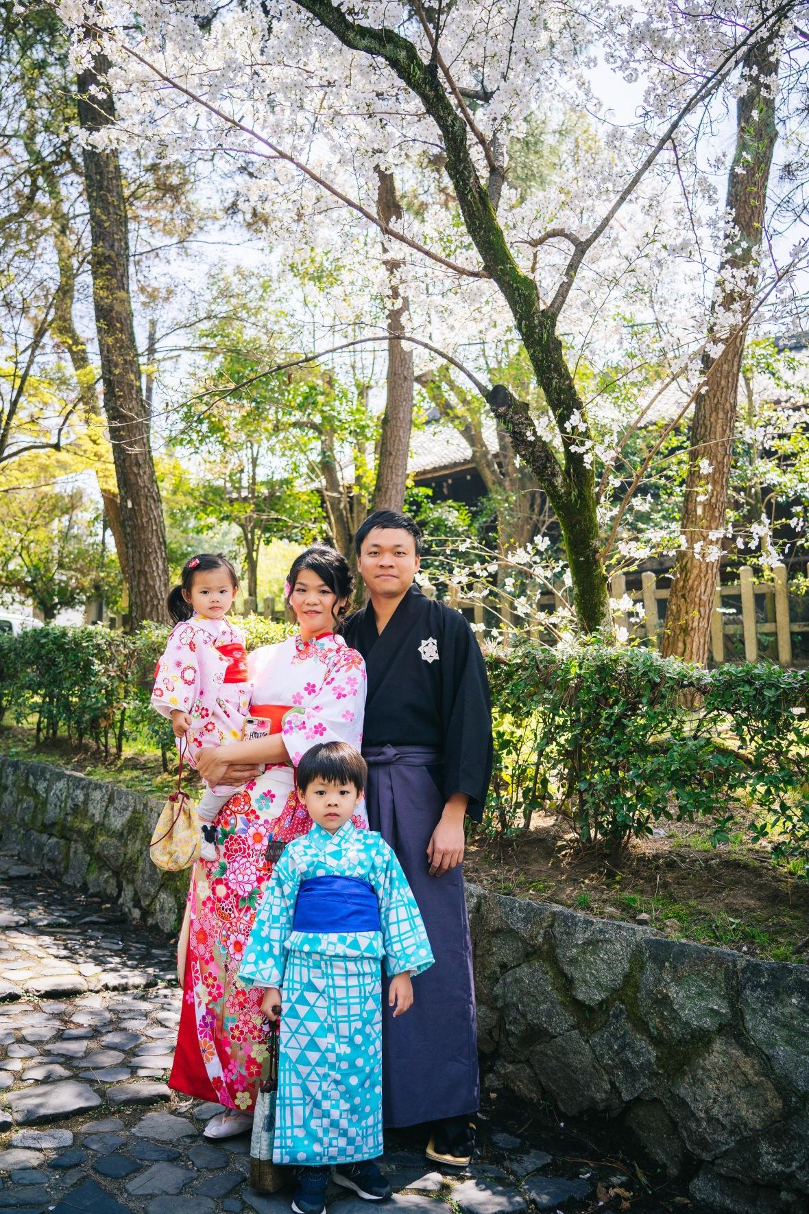 京都櫻花,和風全家幅拍攝