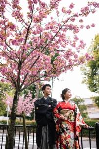 京都樱花, 和服写真拍照